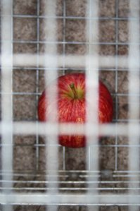 Photo of an apple in a cage by Brendan Timperley