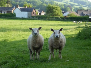 On the delightful walks around Hay, you will meet locals like these.