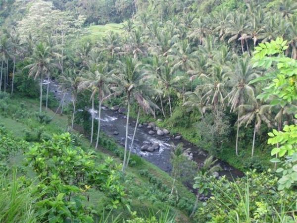 ubud-river1