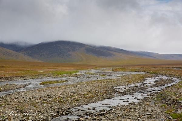 ArcticBryce-0028